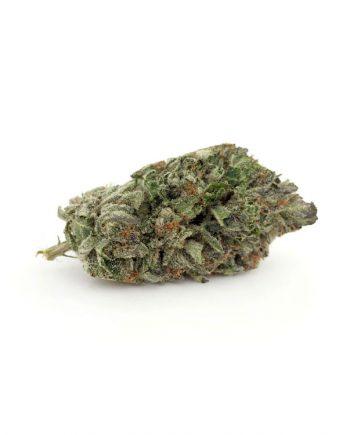 GGC Marijuana Strain from BluePlueYellow