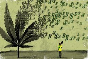 Marijuana Affiliate Program
