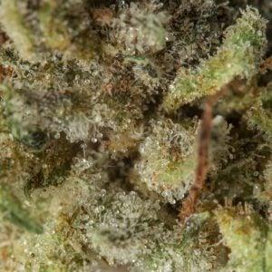 blue-coma-marijuana-strain-5