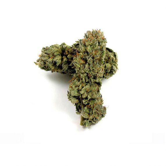 GG4 Strain mail order marijuana