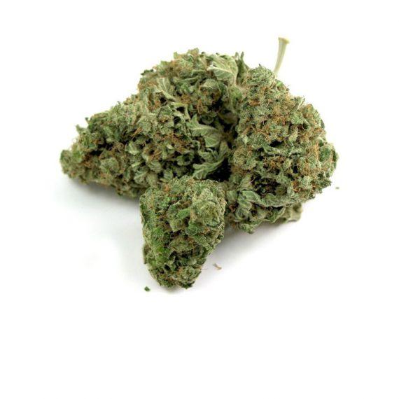 Love Potion Sativa BC Bud