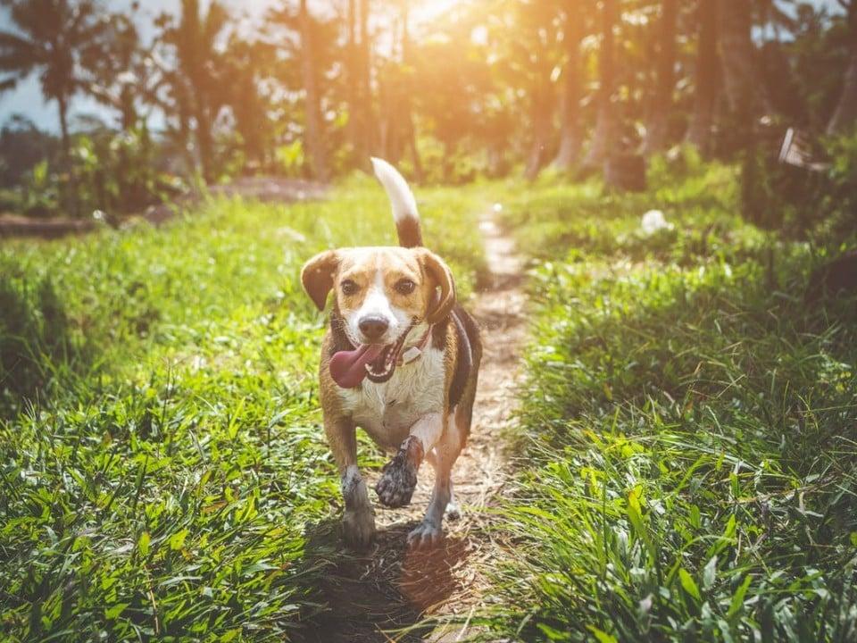 CBD Oil for Dogs Dosage Blog