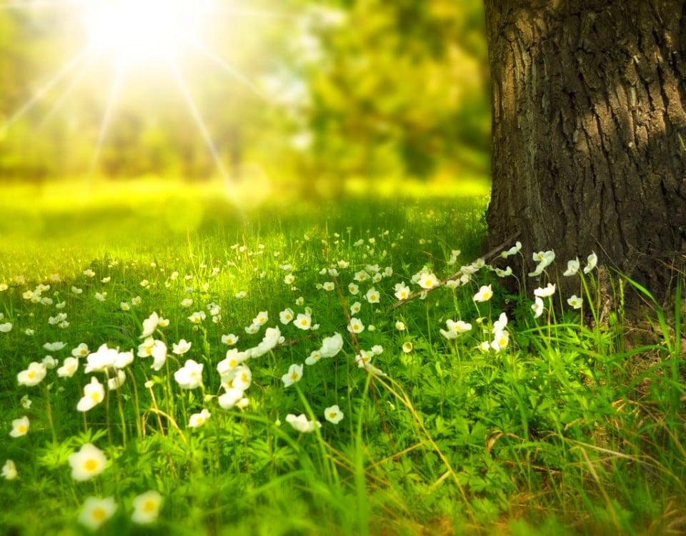 nature benefits of cbd