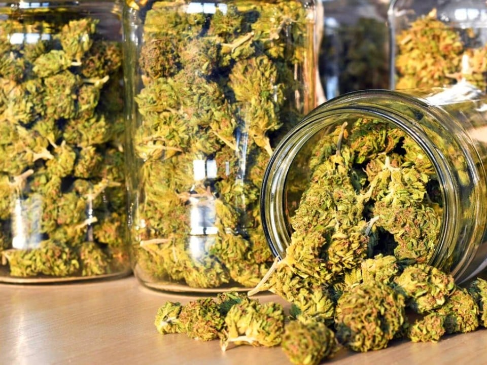 sativa and indica weed strains in jars